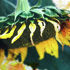 Anna Louise - Big Sunflower Abstract