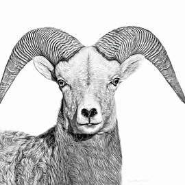 Jennie Marie Schell - Bighorn Sheep Ram Black and White