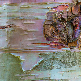 Birch Bark Abstract by Patti Deters