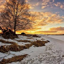 Jukka Heinovirta - Birch Tree In The Sunset