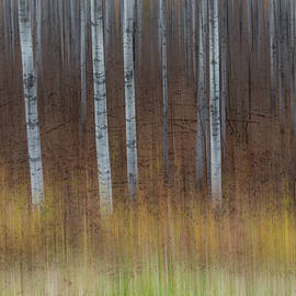 Patti Deters - Birch Trees Abstract #3