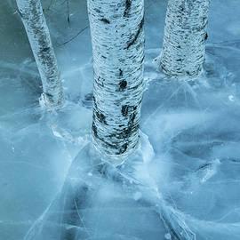 Edward Muennich - Birches in ice.