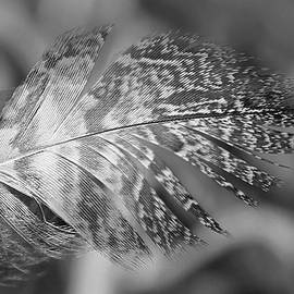 Bird Feather by Stamp City