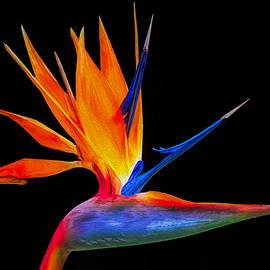 Bird of Paradise  by Jennifer Stackpole