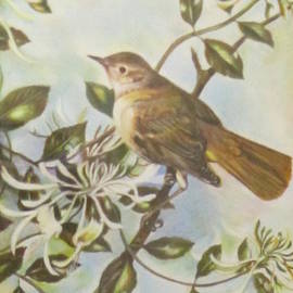 Farideh Haghshenas - Bird on a Branch