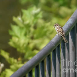 Maria Costello - Bird on a Railing