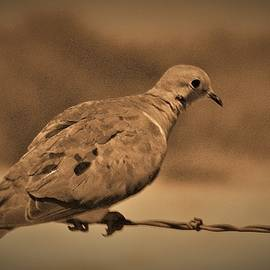 Bill Tomsa - Bird on a Wire