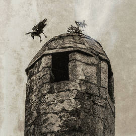 Bird Over Tower by Andrew Wilson