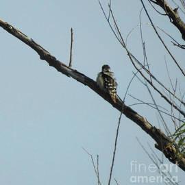 Ruth Housley - Bird Preening On Tree Limb