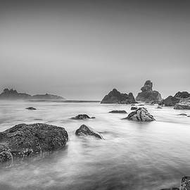 Bird Rock Black And White by Scott Campbell