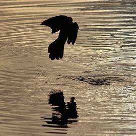 Cynthia Guinn - Bird Silhouette