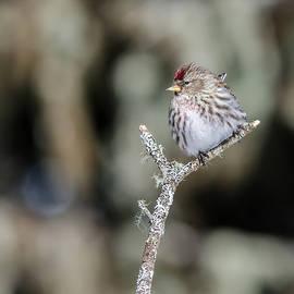 Bird by Gina Levesque