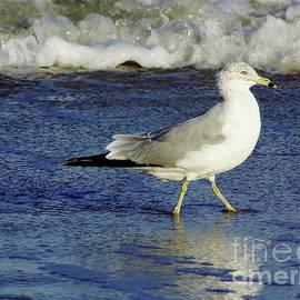 Bird - Walking - Beach by D Hackett