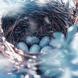 Oksana Ariskina - Birdnest with Blue Eggs