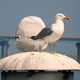 Arlane Crump - Bird