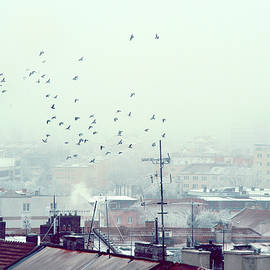 Birds Falling Down the Rooftops by Jenny Rainbow