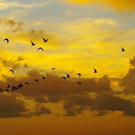 Jeff Swan - Birds in the sunset