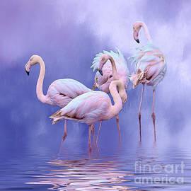 Brian Tarr - Birds of a feather