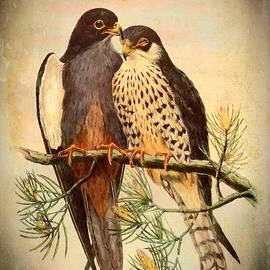 Birds Of Prey 4 by Charmaine Zoe