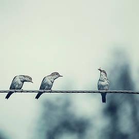 Oksana Ariskina - Birds on Wire