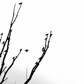 Birds Silhouette in Tree Black and White by Jennie Marie Schell