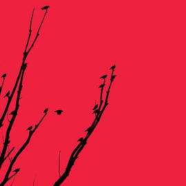 Birds Silhouette Red by Jennie Marie Schell