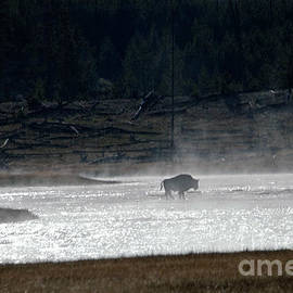 Bison In The River by Cindy Murphy - NightVisions