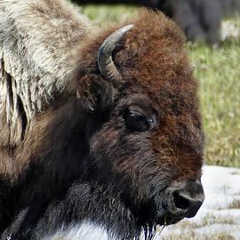 Jeff Brunton - Bison Profile