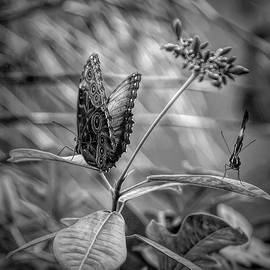 Aimee L Maher Photography and Art Visit ALMGallerydotcom - Black and White Butterflies on Leaves