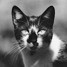 Vlad Baciu - Black and white cat close up