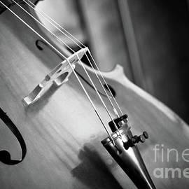 Black and White Cello by KaFra Art