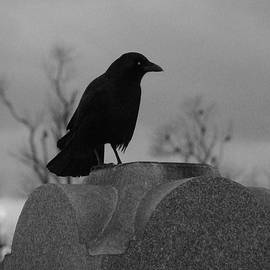 Gothicrow Images - Black And White Crow Watch