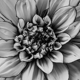 Black And White Dahlia Petals - Garry Gay