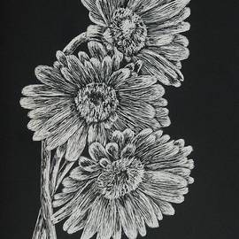 Louise Williams - Black and white Daisies