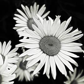 Alisha Jurgens - Black and White Daisy 3