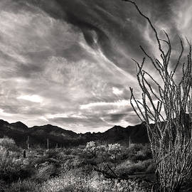 Black and White Ocotillo and clouds by Dave Dilli