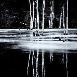 Tom Singleton - Black And White Winter Thaw Relections