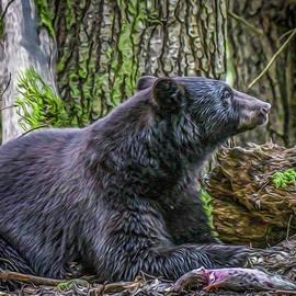 Joy McAdams - Black Bear At Rest