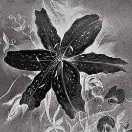Black Beauty by Hazel Holland