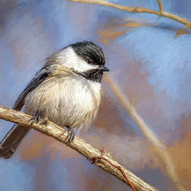 Black-capped Chickadee by Wes Iversen