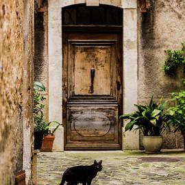 Maggie McCall - Black Cat and Wood Door, Biot, France