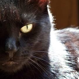 Black Cat by Jai Johnson