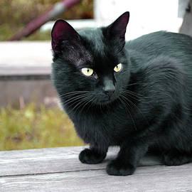 Marina Pacurar - Black Cat Outdoors Autumn