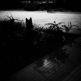 Black Dog  #dog #animal #pet #portrait