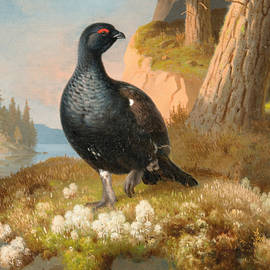 Black Grouse - Ferdinand von Wright