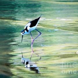 Diann Fisher - Black-necked Stilt