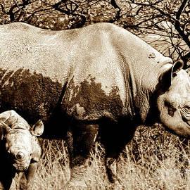 Baggieoldboy - Black Rhino and youngster