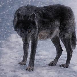 Joachim G Pinkawa - Black She-Wolf