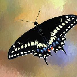 Donna Kennedy - Black Swallowtail