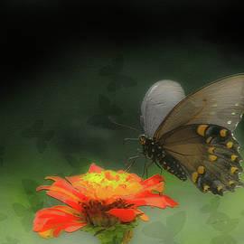 Black Swallowtail Illuminates by Ola Allen